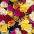 Flowers importing exporting